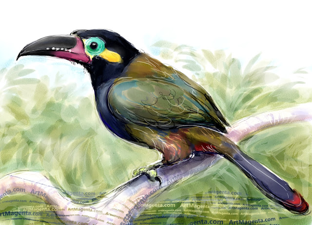 Guianan toucanet sketch painting. Bird art drawing by illustrator Artmagenta