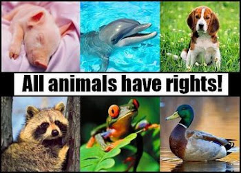 Animal Rights Groups
