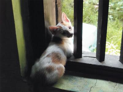 Foto-Foto Anak Kucing Lucu di Luar Jendela Kamar Kost Gue 08