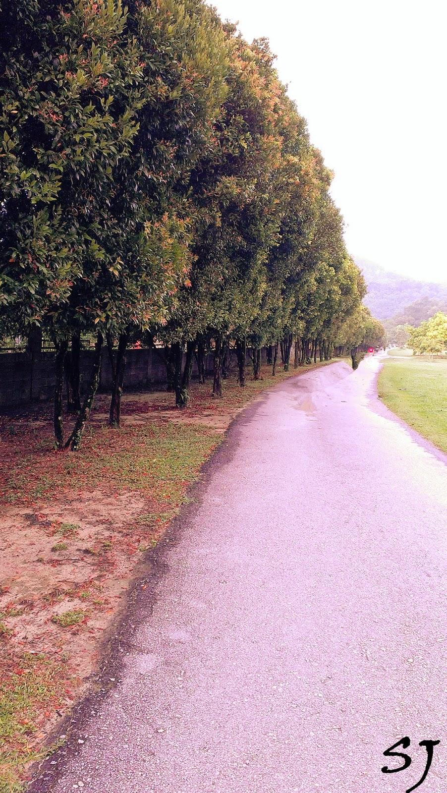 trees;garden;botanic garden