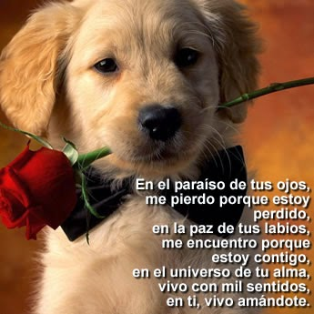 Frases Bonitas de Amor, parte 2