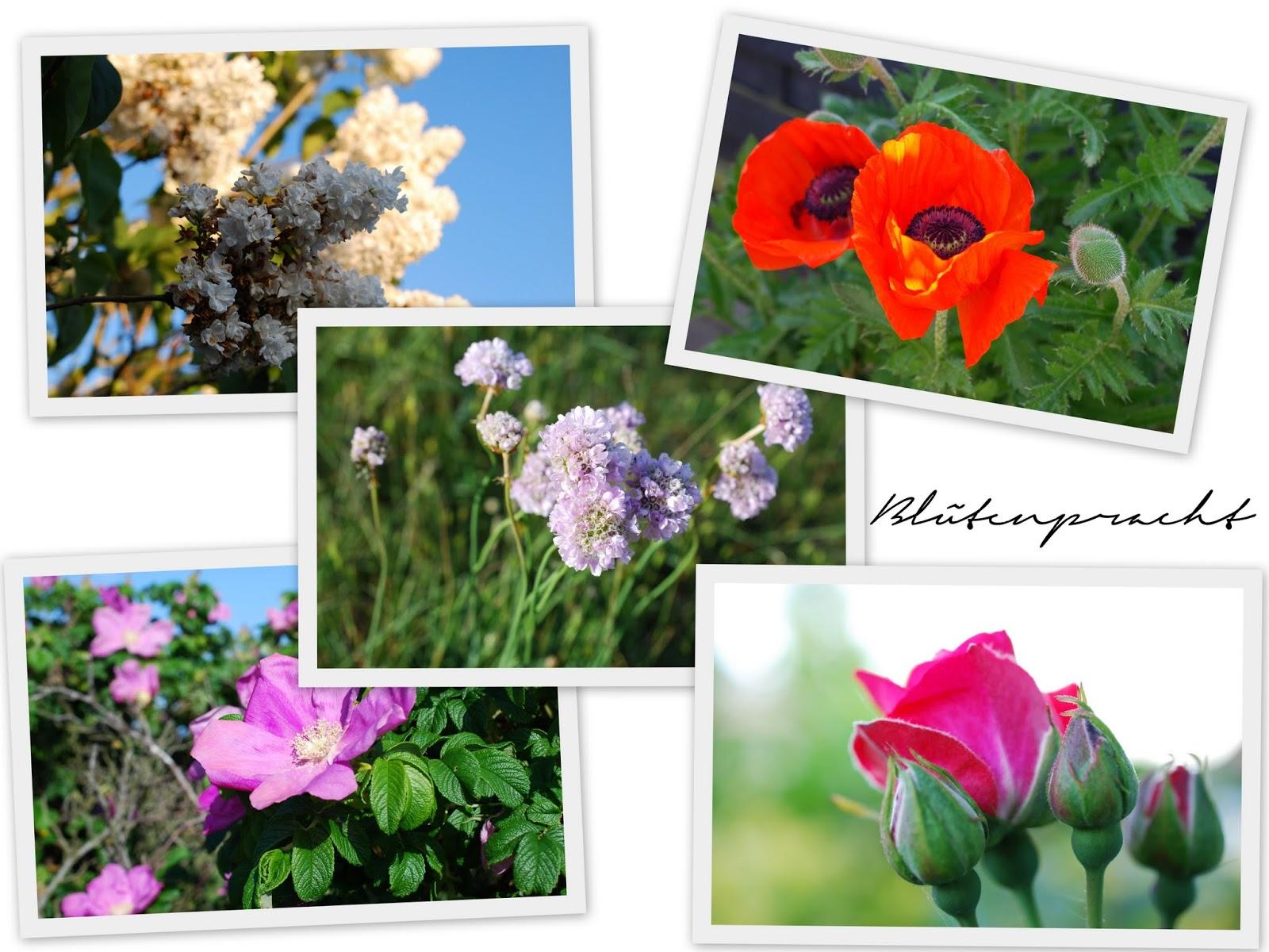 Sylt Blütenpracht im Mai
