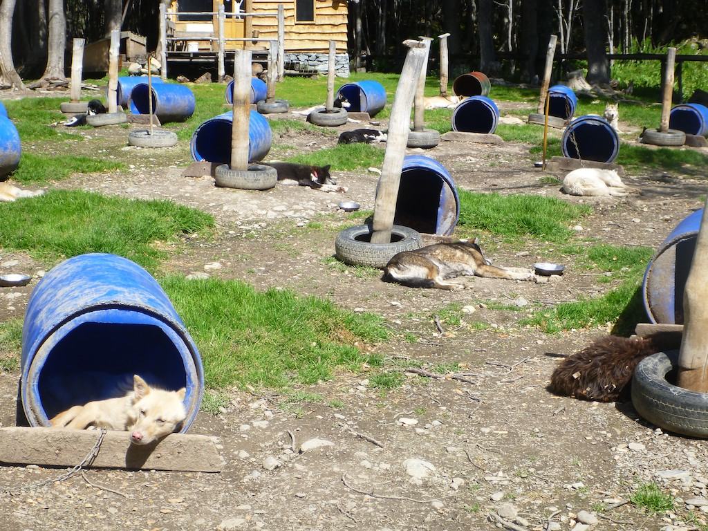 Beeyooteeful patagonia tierra del fuego sherri jo 39 s for Barrel dog house designs