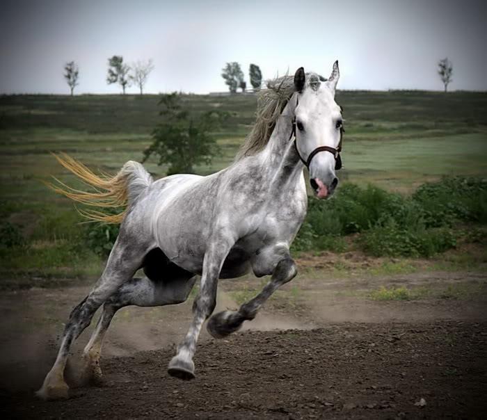 14 beautiful white horse photos