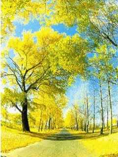 yellow tree sunshine wallpaper