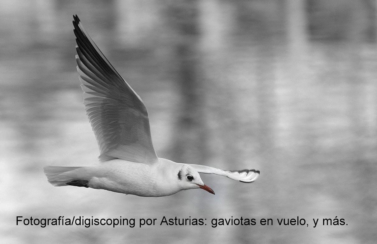 Digiscoping/fotografía por Asturias, y más.