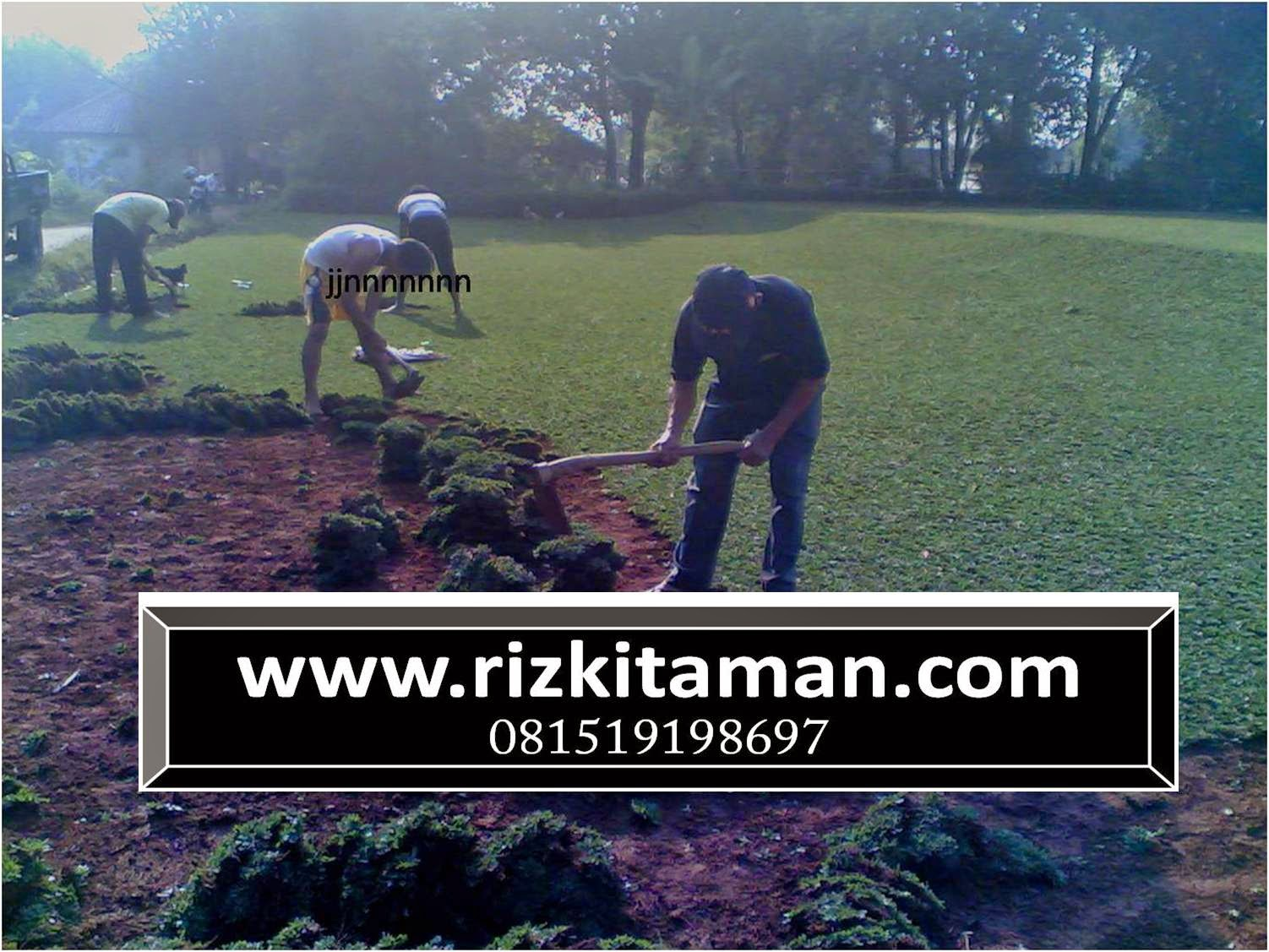 Tukang rumput gajahmini | suplier rumput taman dan jasa penanaman rumput