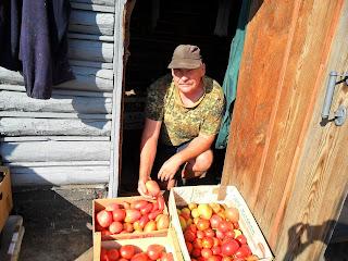 Сортирую помидорки