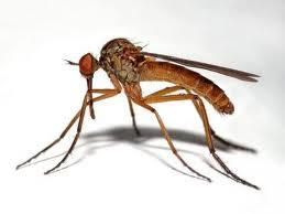 Aliviate de una picada de mosquitos