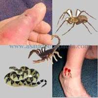 Como agir nos casos de picada por aranhas, cobras e escorpiões.