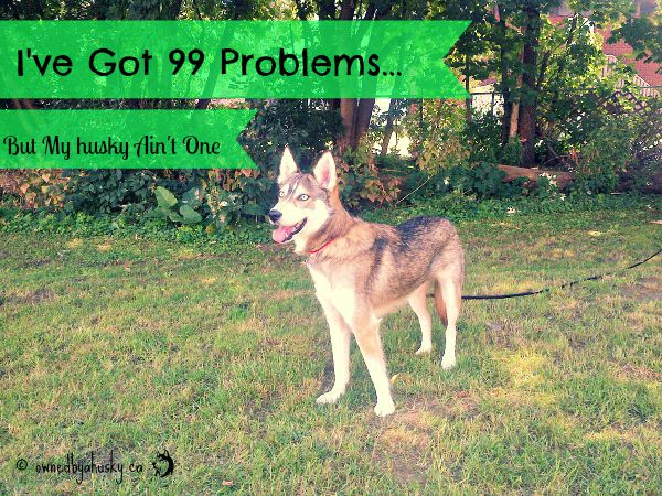 I've Got 99 Problems... But My Husky Ain't One