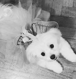 dog in residence