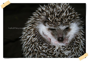 my hedgehog :)