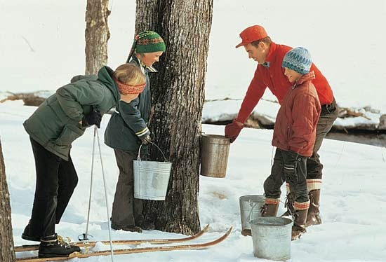 three children along with a maple farmer observing how the maple farmer extracts the maple