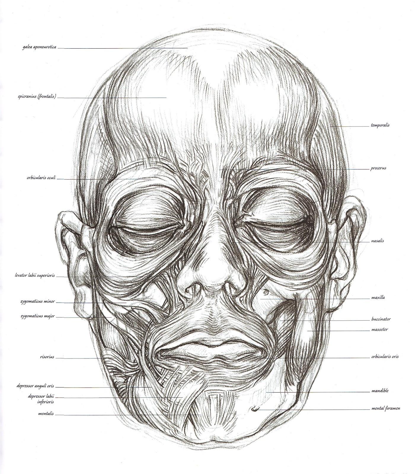 Sarah simblet anatomy