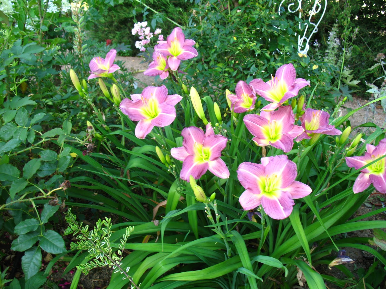 Roses du jardin ch neland h m rocalle m taphor for Plante 4 images 1 mot