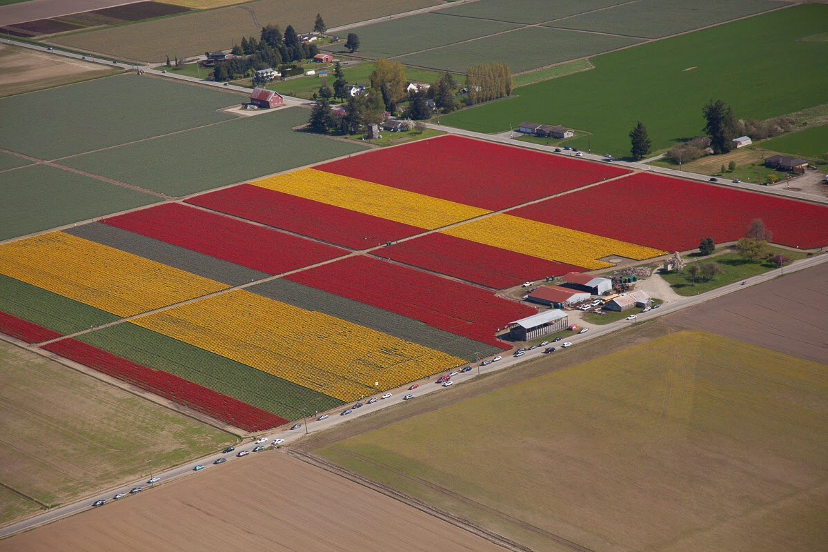 Tulips! Flying 206!