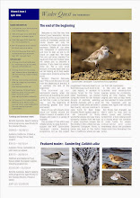 Wader Quest e-newsletter Vol 1 Issue 1