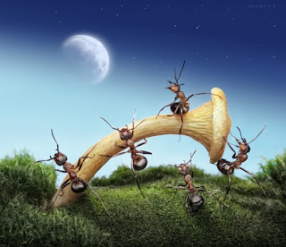 The Secret Life of Ants