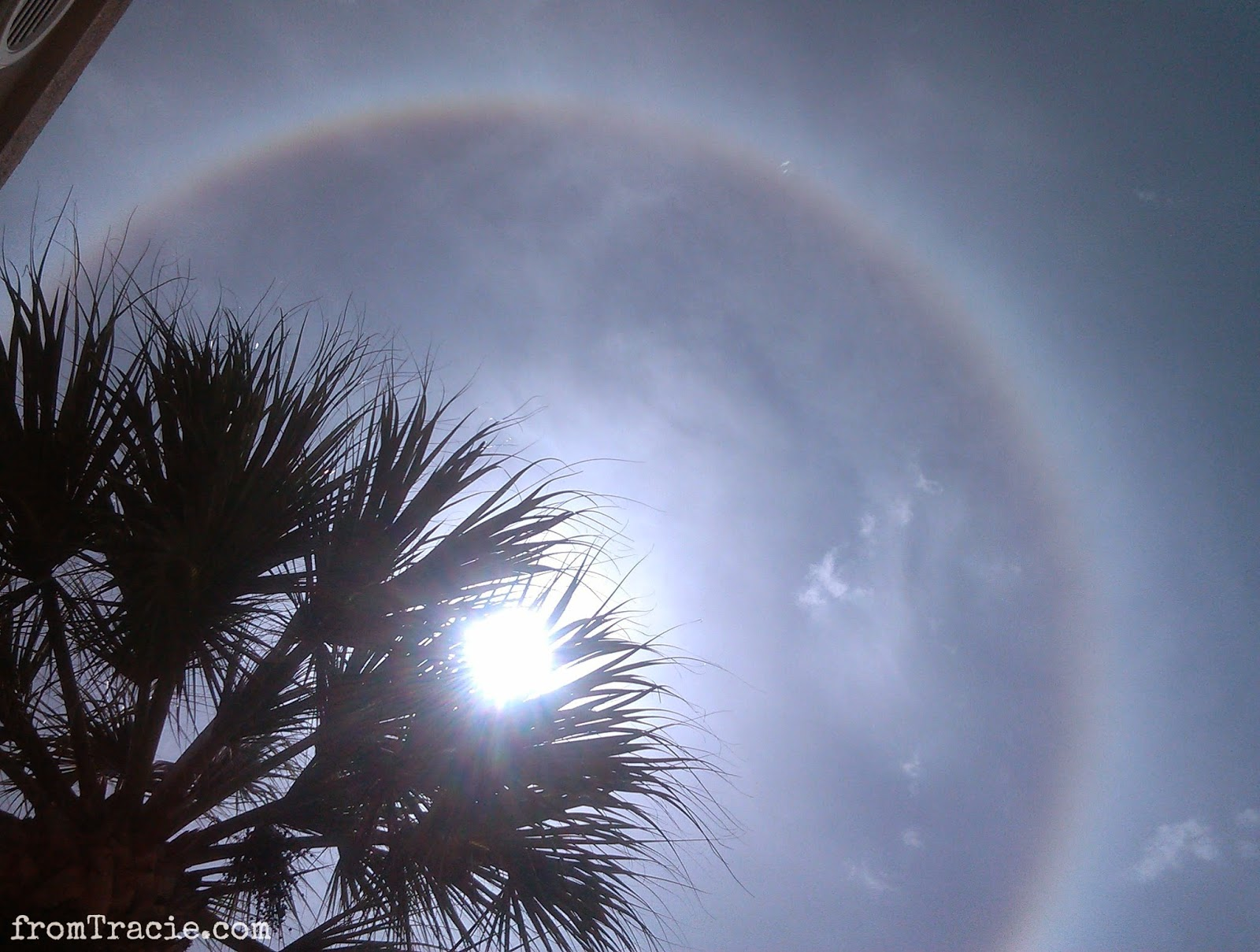 sun shining through palm tree with halo