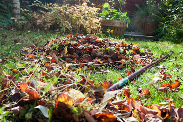 rake and pile of leaves