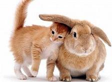 convivencia del conejo con otros animales