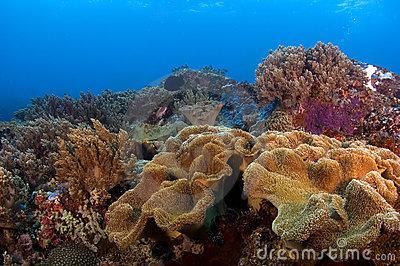 Filipinas: Pescadores clandestinos destruíram barreira de coral de mais de 7.000 hectares