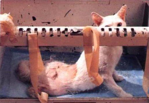 max, factor, experimentacion, animal, dolor, maltrato, denuncia