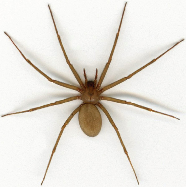 Spiders - Northwest Pest ControlNorthwest Pest Control