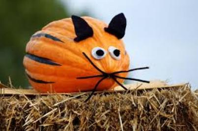 funny animal pumpkin without carving
