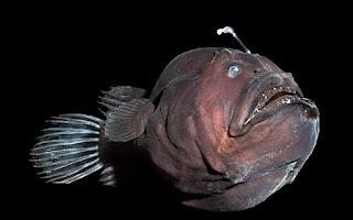 peștele pescar