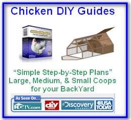 Your Chicken Coop Guide