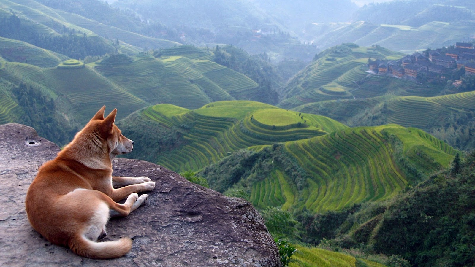 Dog with a View  Full HD Desktop Wallpapers 1080p