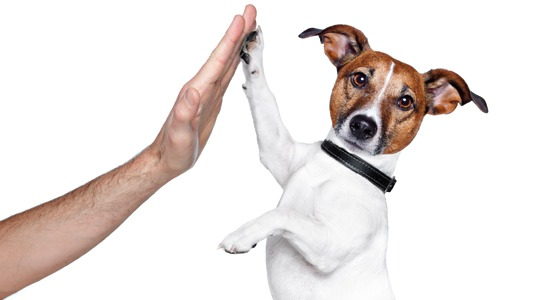 Inquérito Civil para apurar a implantação e eficiência do serviço público de bem-estar animal