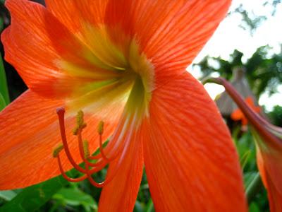 Tante Pap: Blomster blomster og blomster