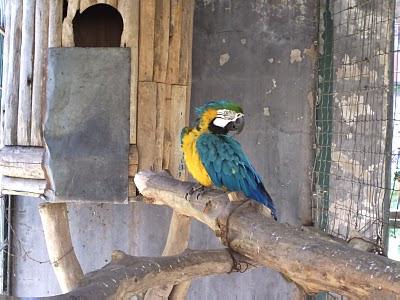 صور حديقة الطيور 13