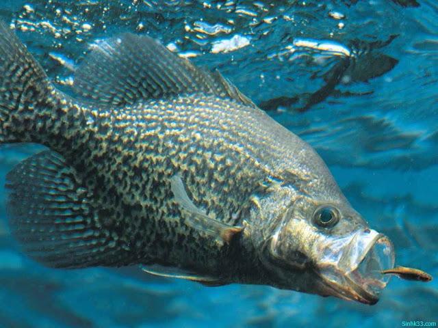 Hình cá đẹp