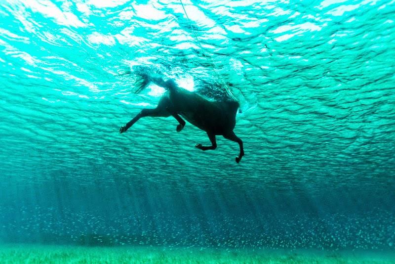 Schwimmendes Pferd: Mein Bild des Tages