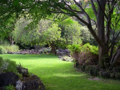 Arte y jardiner a arboles y arbustos para zonas sombr as - Arboles bonitos para jardin ...
