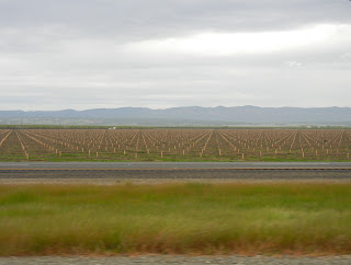 Unending fields on I-5 in SoCal