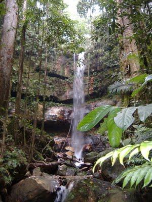 Taman Nasional Bukit Tigapuluh TNBT