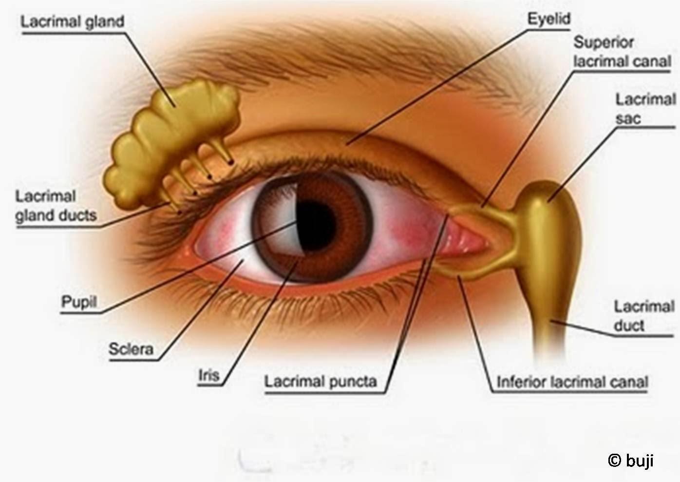 Makanan yang baik untuk kesehatan mata dan Cara Menjaga Kesehatan mata