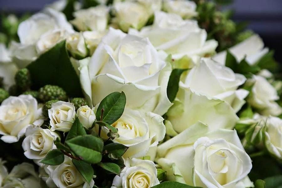 τριαντάφυλλα λευκά ανθέμιο