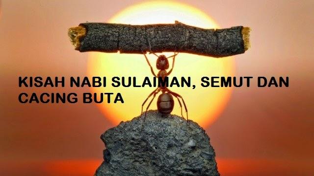 Kisah Nabi Sulaiman Dengan Semut dan Cacing Buta