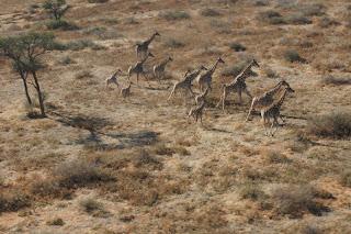 namibia,namibia savanna,namibia nature reserve