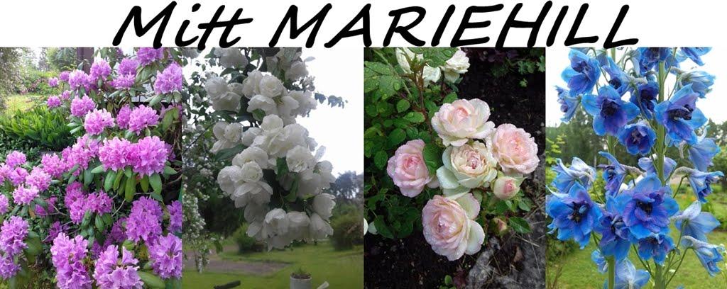 Mitt Mariehill