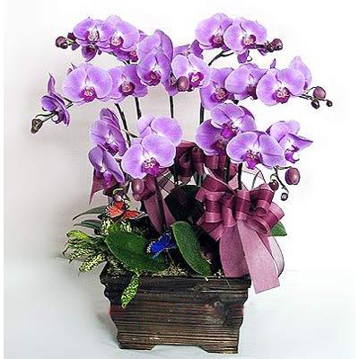 Image result for bunga meja anggrek