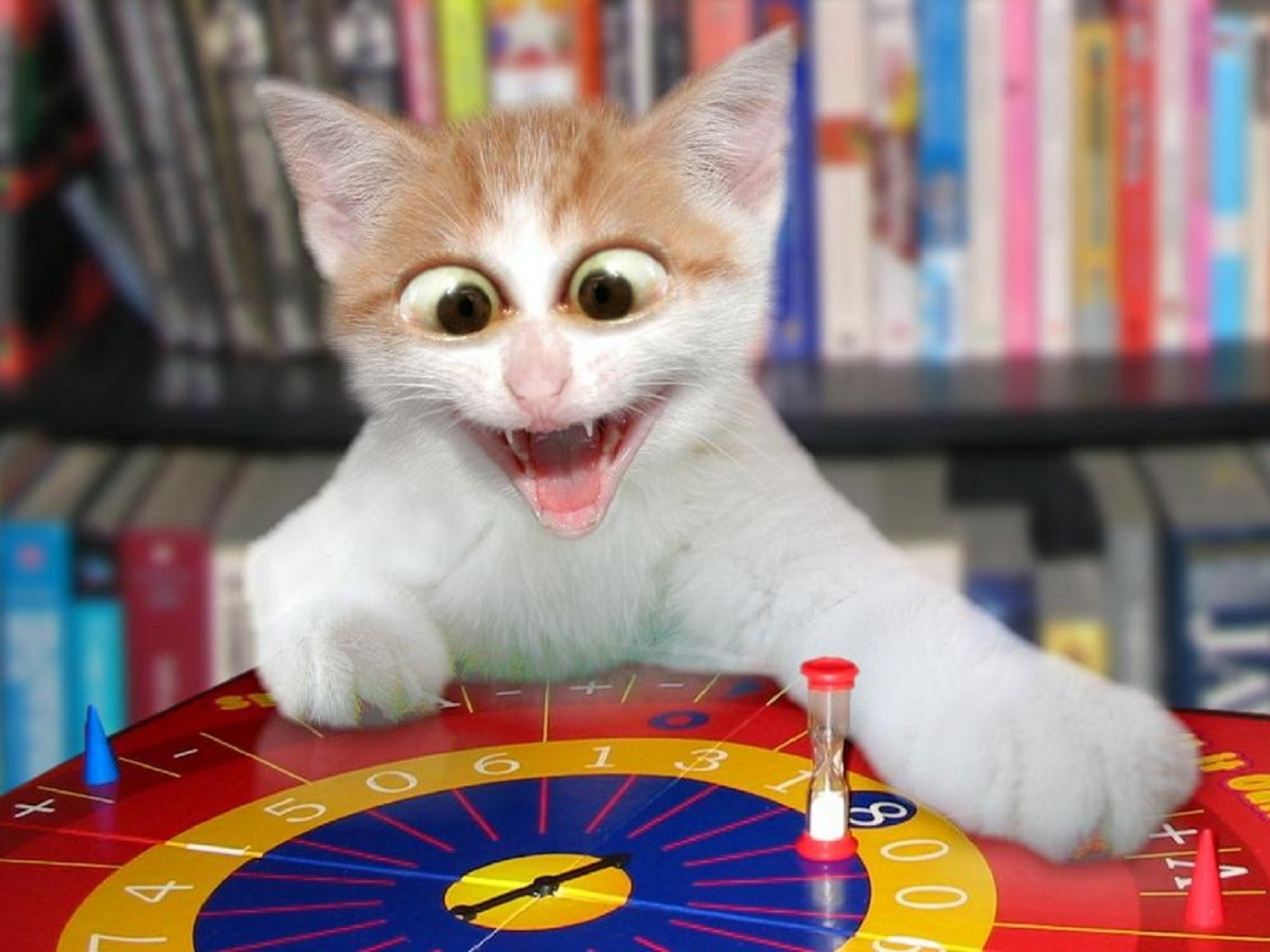 50 Naughty Funny Cats