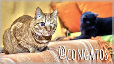 Gatos Sofá Con Gatos Gatera Rumbo