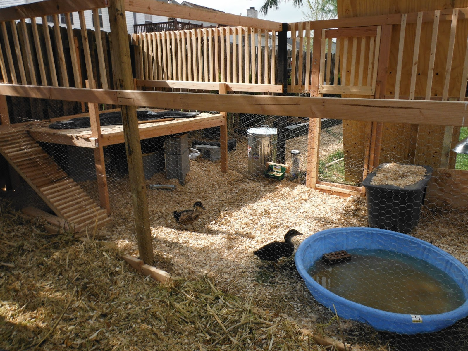 Suburban Backyard Farming : Suburban Backyard Farm
